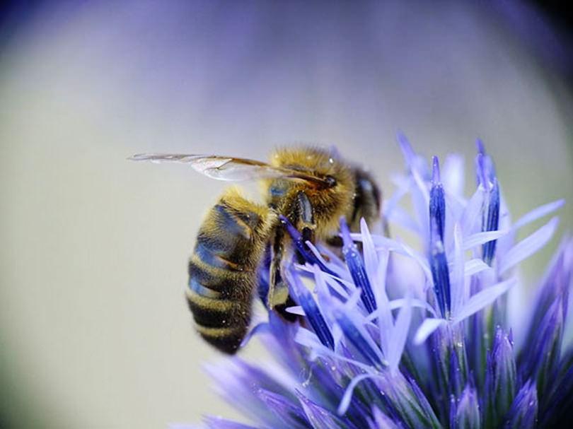 The Bee City